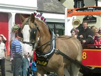 Horse trams service - picture
