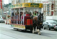 Tram horse death - picture