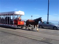 Horse tram track relocation - picture