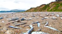 Dead fish 'natural phenomenon' - picture
