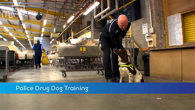 Preview of - Police Dog Training