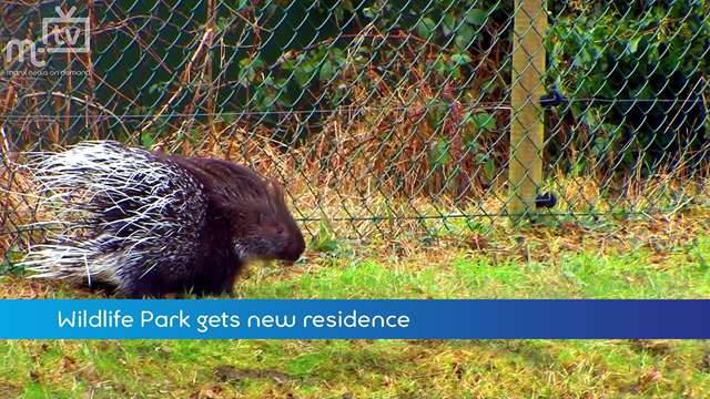 Preview of - Porcupines get new home