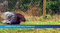 Porcupines get new home