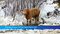 The Big Snow: Farmer (2)
