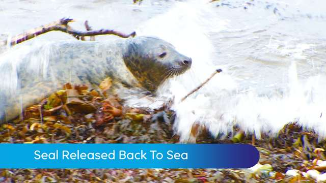 Preview of - Seal released