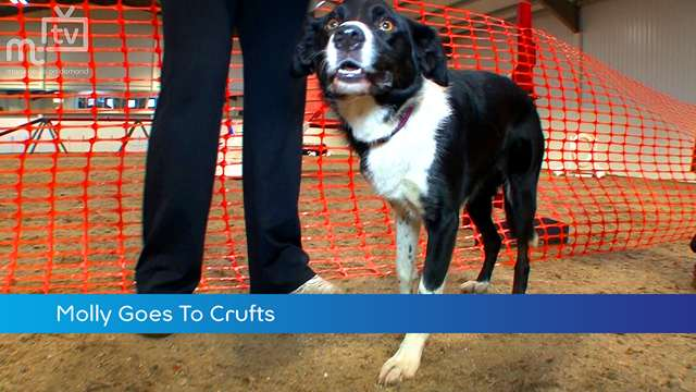 Preview of - Molly Goes To Crufts