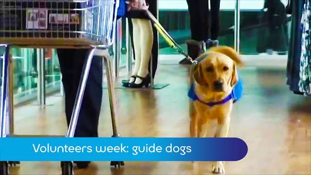 Preview of - Volunteers week: guide dogs