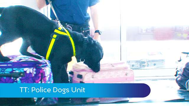 Preview of - TT: police dog unit