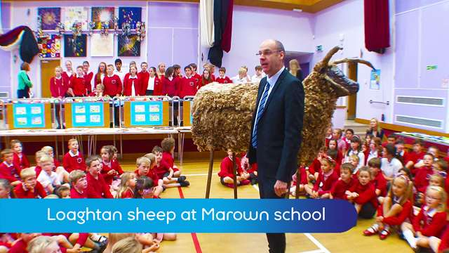 Preview of - Loaghtan school sheep