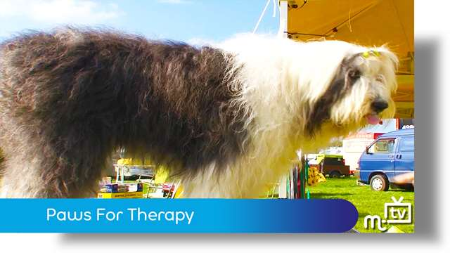 Preview of - Paws For Therapy