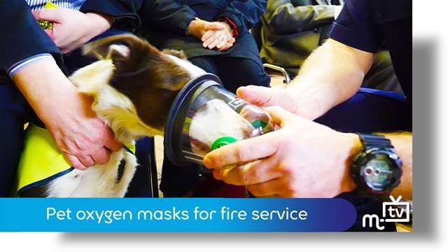 Preview of - Pet oxygen masks