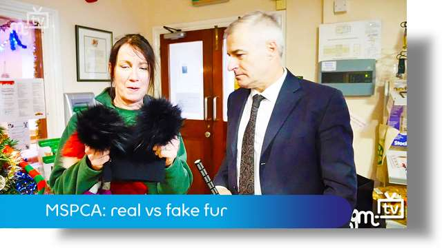 Preview of - MSPCA: fake vs real fur